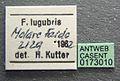 Formica lugubris casent0173010 label 1.jpg