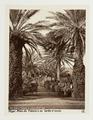 Fotografi på palmallé i Jardin d'Essai, Alger - Hallwylska museet - 107927.tif