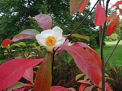 Flower and leaves in the fall