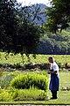 French Laundry Gardens (4402544681).jpg