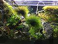 Freshwater aquarium & Fish.jpg