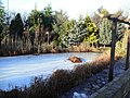 Frozen ornamental pond - geograph.org.uk - 1670837.jpg