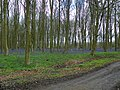 GOC Watton-at-Stone 010 Hazeldell Wood, Watton-at-Stone (27239400930).jpg