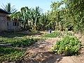 Garden - panoramio (5).jpg