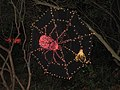 Garden d'Lights 2008 at the Bellevue Botanical Garden, img039.jpg