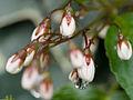 Garden flowers (14208329704).jpg