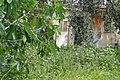 Garden in Kalekoy - Gokceada Island - Turkey - 01 (5737920274).jpg