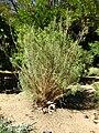 Gardenology.org-IMG 2056 hunt09oct.jpg