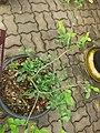 Gardenology.org-IMG 7705 qsbg11mar.jpg