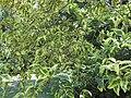 Gardenology.org-IMG 9387 rbgm10dec.jpg