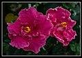 Gardens by the Marina Bay - Dome Flowers-04 (8323743398).jpg