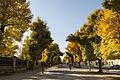 Gardens in Schönbrunn (1).jpg