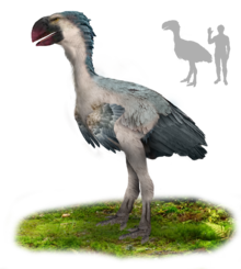 A big bird with blue-gray feathers, a white underbelly, and a large, parrot-like, red beak
