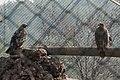 Gaziantep Zoo 2238.jpg