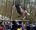 Geierschau im Wildpark Bad Mergentheim. 01.jpg