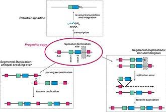 Gene redundancy - Figure 1. Common mechanisms of gene duplication.