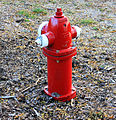 Gfp-fire-hydrant.jpg