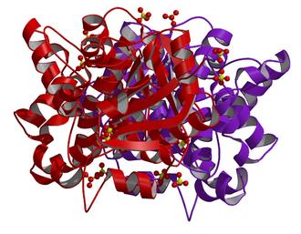 Glycerol-3-phosphate dehydrogenase - Image: Glycerol 3 phosphate dehydrogenase 1