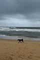Goa - An Overcast Season (42).JPG