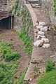 Goats in Conques 02.jpg