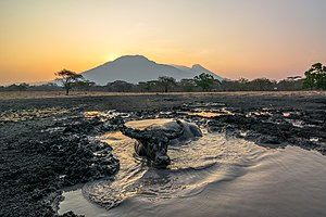 East Java - Image: Golden hour at bekol savannah