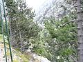 Gorges de Núria des del cremallera P1030254.JPG