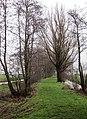 Goudriaanse Kade, Goudriaan, Netherlands. - panoramio (1).jpg