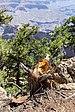 Grand Canyon (Arizona, USA), South Rim nahe Tusayan -- 2012 -- 5898.jpg