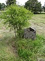 Gravestone in Jewish Cemetery - Tykocin - Poland - 01 (36155943071).jpg