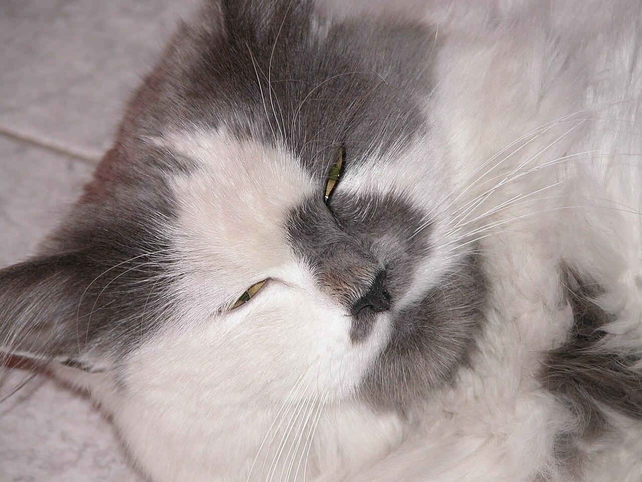 Cat S Eyes Episode