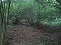 Grim's Ditch, Stockton Wood near Stockton 2 - geograph.org.uk - 568596.jpg
