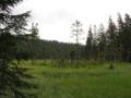 Grosser Arbersee-Moor.jpg
