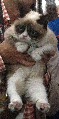 Grumpy Cat SXSW 2013 cropped.jpg