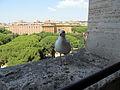 Gull (15279342957).jpg