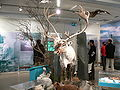 Höfn - Gletschermuseum Rentier.jpg