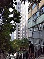 HK 上環 Sheung Wan U Lam Terrace Caine Lane Thursday morning October 2019 SS2 08.jpg