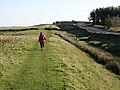 Hadrian's Wall National Trail east of Brocolitia - geograph.org.uk - 1017660.jpg