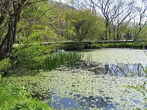 Hakone Botanical Garden of Wetlands - Image: Hakone Botanical Garden of Wetlands