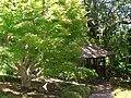 Hakone Gardens, Saratoga, CA - IMG 9161.JPG
