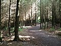 Haldon Forest Trail - geograph.org.uk - 1429568.jpg