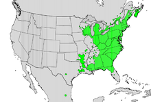 Hamamelis virginiana map.png