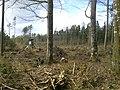 Handewitter Forst nach Sturm Xaver 2.jpg