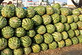 Hassan, melons (9881389856).jpg