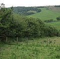 Hedge and fields off Ash Lane - geograph.org.uk - 455295.jpg