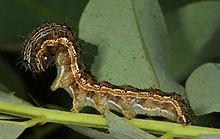 Pest Organism Wikipedia