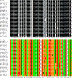 Sequence alignment - Alignment of 27 avian influenza hemagglutinin protein sequences colored by residue conservation (top) and residue properties (bottom)