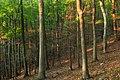 Hemlock Ridge Preserve (Revisited) (4) (15130209228).jpg