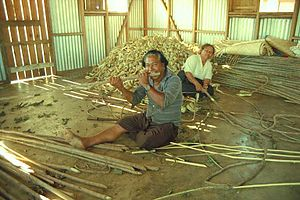 Tapa cloth - Stripping the bark from the trees in Nomuka