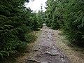 Hiking trail at northeast of the Altkönig 4.jpg