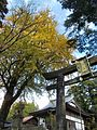 Hikosan Jingu autumn leaves 03.jpg